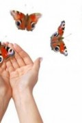 Butterfly Kit 1