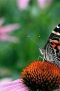 Butterfly Kit 3
