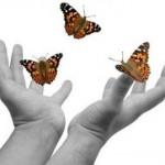 Butterfly Kit 4
