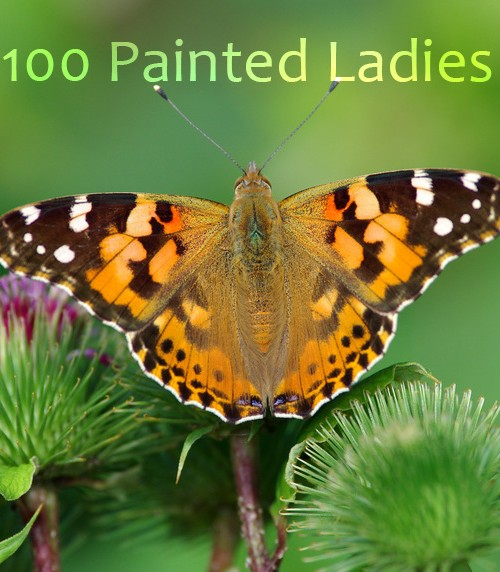 Painted Lady - 2