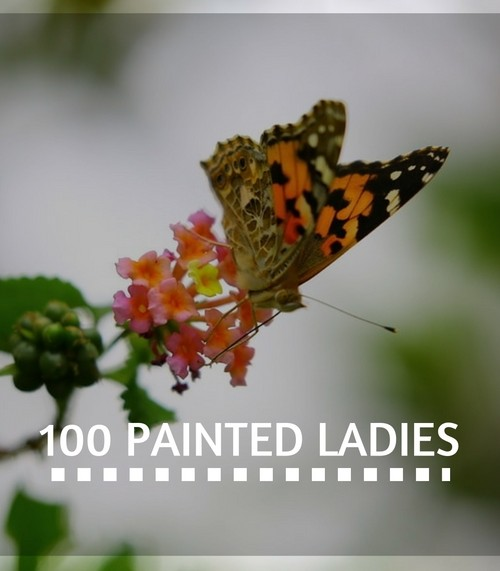 Memorial 100 Painted Lady Release Package