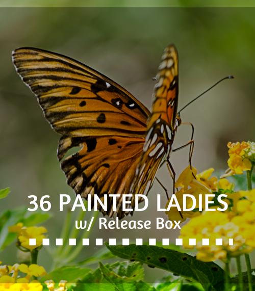 painted-ladies-release-box