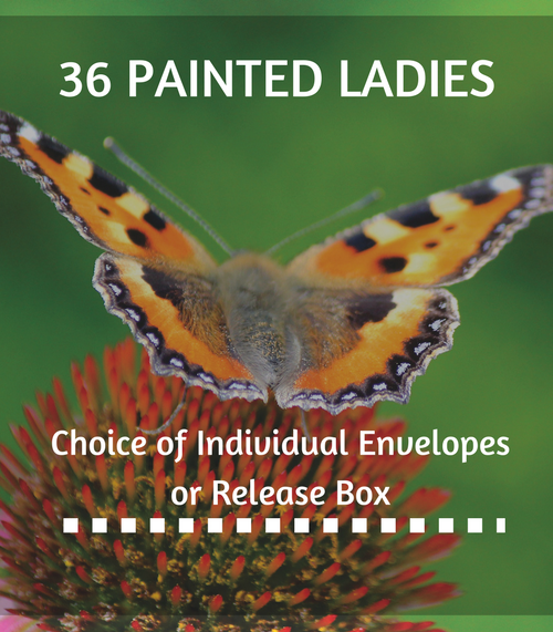 36 Painted Ladies