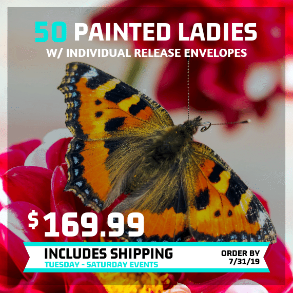 Summer 2019 butterfly release special