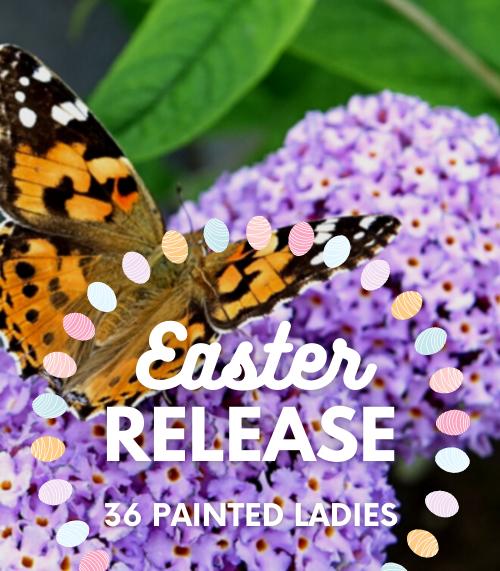 Easter Butterfly Release
