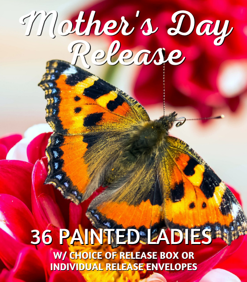 Mother's Day Butterfly Release